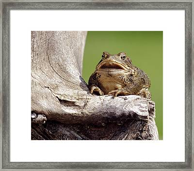 Frog Framed Print by David Lester
