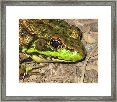 Frog Framed Print by Debbie Finley