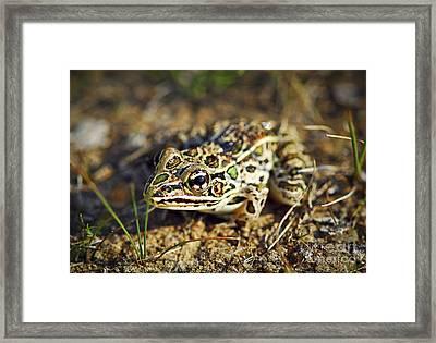 Frog Framed Print by Elena Elisseeva