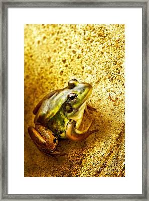 Frog Framed Print by HD Connelly