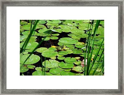 Frog Heaven Framed Print by LeeAnn McLaneGoetz McLaneGoetzStudioLLCcom