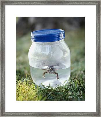 Frog In A Jar Framed Print by Adam Crowley