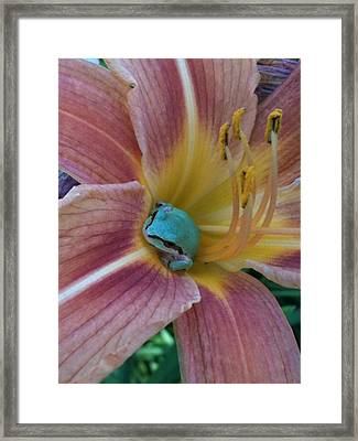 Frog In The Day Lilly Framed Print by Jeremiah Colley
