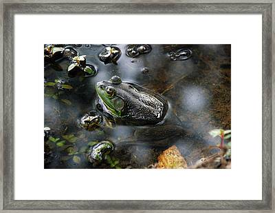 Frog In The Millpond Framed Print