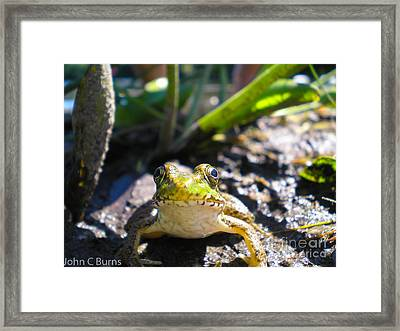 Framed Print featuring the photograph Frog Life by John Burns