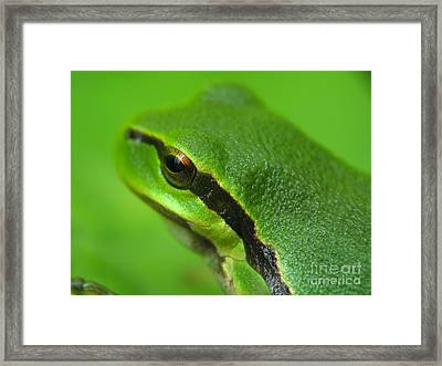 Frog Look Framed Print by Odon Czintos