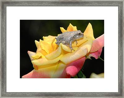 Framed Print featuring the photograph Frog Meets Rose by Kathy Gibbons