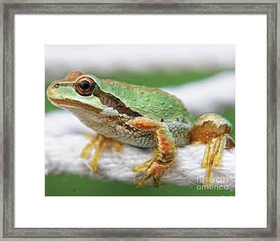 Frog On A Rope Framed Print by Billie-Jo Miller
