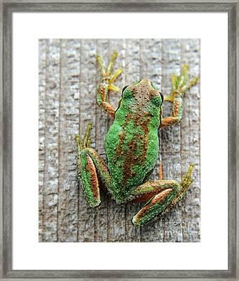 Frog On Wall Framed Print by Billie-Jo Miller