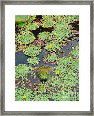 Framed Print featuring the photograph Frog Pond by Jeanne  Woods