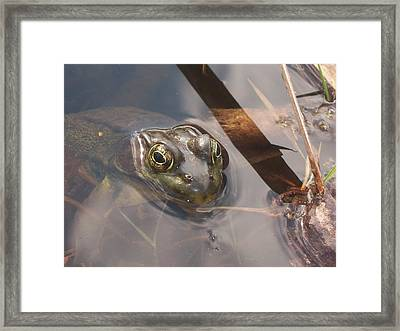 Frog Framed Print by Samantha Howell