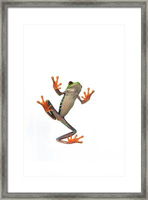 Frogs Belly Framed Print by Corey Hochachka