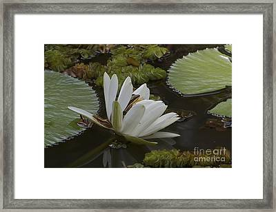 Framed Print featuring the pyrography Frogs Paradise.  by Gary Bridger