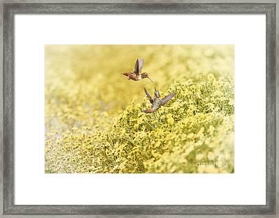 Frolic In The Garden Framed Print