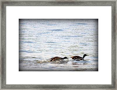 Framed Print featuring the photograph Frolicking Fun by Kathy  White