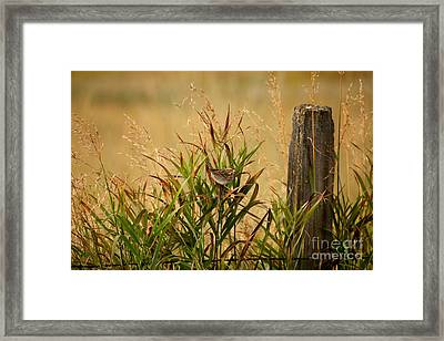 Frolicking In The Grass Framed Print