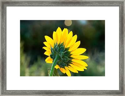 Framed Print featuring the photograph From Behind by Monte Stevens