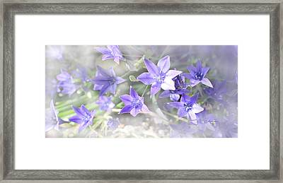 From My Garden Framed Print by Kume Bryant