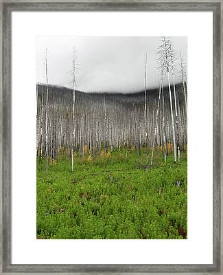 From The Ashes 1 Framed Print