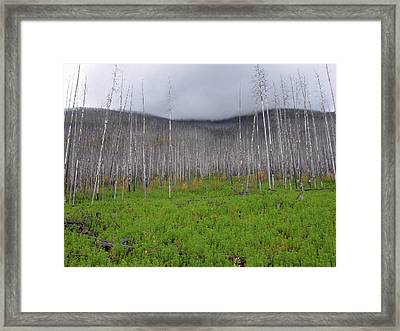 From The Ashes II Framed Print