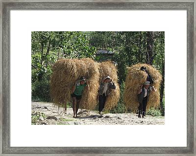 Framed Print featuring the photograph From The Fields by Louise Peardon