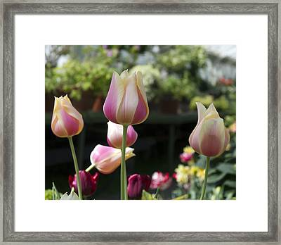 Front And Center Framed Print by Peter Chilelli