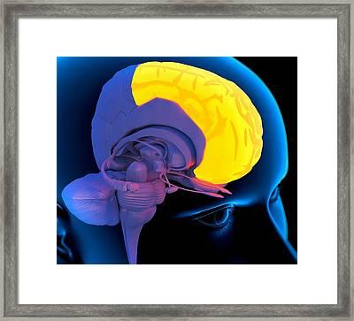 Frontal Lobe In The Brain, Artwork Framed Print by Roger Harris