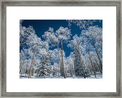 Frost And Snow Covered Trees, Colorado Framed Print
