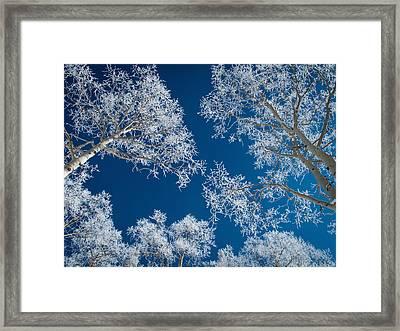 Frost-covered Aspen Trees Framed Print
