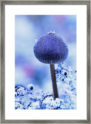 Frost Covered Mushroom, North Canol Framed Print