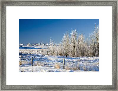 Frost-covered Trees In Snowy Field Framed Print by Michael Interisano