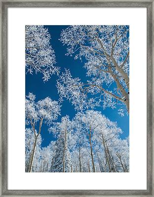 Frost Covered Trees On A Cold, Winter Day Framed Print