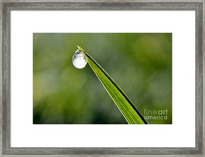 Frost On Blade Of Grass Framed Print