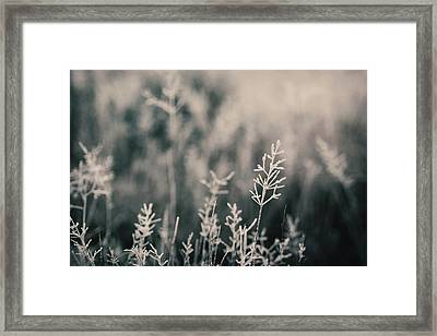 Frost On Grasses, London Framed Print by Kirstin Mckee