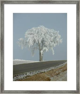 Framed Print featuring the photograph Frost On The Big Tree  by Penny Meyers