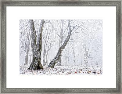 Frostbitten Forest Framed Print by Evgeni Dinev