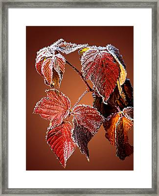 Framed Print featuring the photograph Frosted Leaves by Judy  Johnson