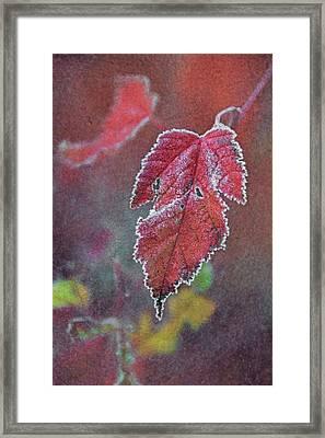 Frosted Framed Print by Odd Jeppesen
