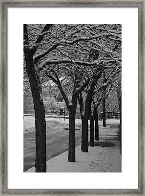 Frosted Trees Framed Print by Artist Orange