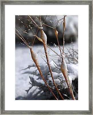 Frosted Trumpets Framed Print by Joe Schofield
