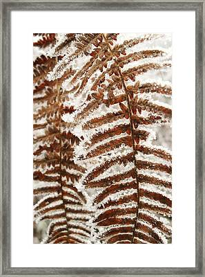 Frosty Fern Framed Print