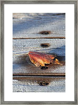 Frosty Framed Print by Lauri Novak