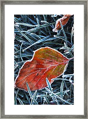 Frosty Leaf Framed Print by Elena Elisseeva