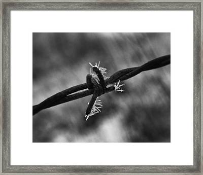 Frosty Thorn Framed Print by Coby Cooper