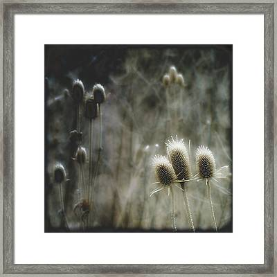 Frosty Tops Framed Print by Gothicrow Images