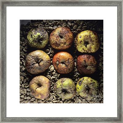 Frozen Apples Framed Print by Bernard Jaubert