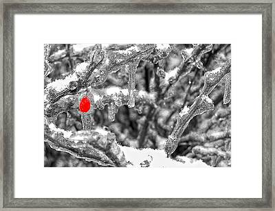 Frozen Berry Framed Print