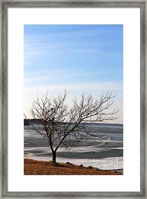 Frozen Framed Print by Billie-Jo Miller