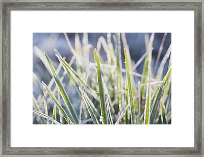 Frozen Blades Of Grass Framed Print