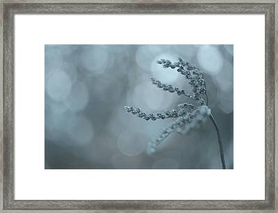 Frozen Dried Grass Framed Print by Alexandre Fundone